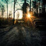 bergherbos-licht
